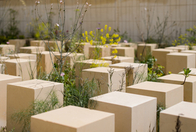 Chelsea Flower Show 2017  'The M&G Garden'